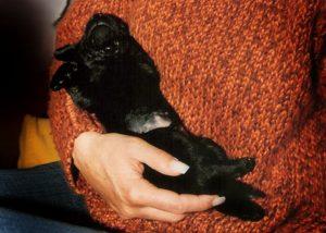 Hundeschule Freising - Impressionen