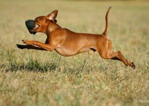 dogtraining_06